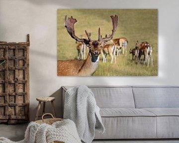 Hirsch mit Herde von Ulrike Leone