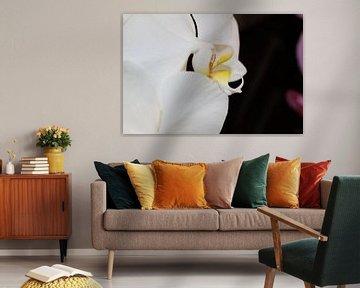 Prachtige Witte Orchidee von Mickey Tromp