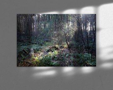 Les rayons du soleil viennent de derrière les arbres sur André Muller