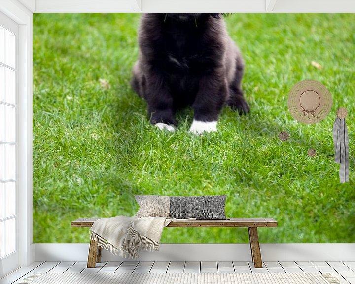 Beispiel fototapete: Welpe im Gras von Edith Wijte