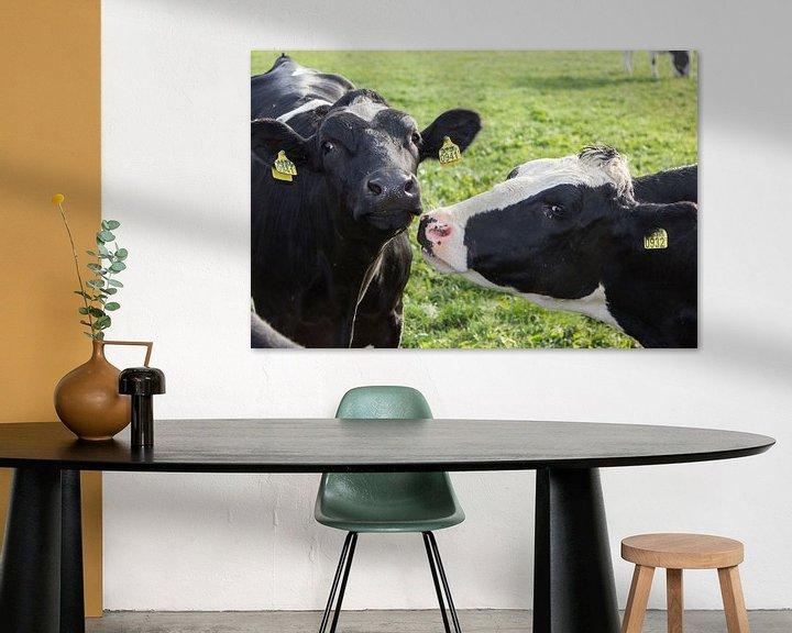 Beispiel: Dutch cows in the sun. von Maarleveld Fotografie