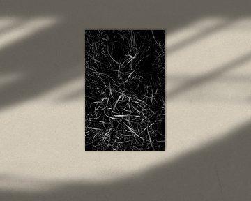 Schwarz-Weiß Gras abstrakt von Linda Bouritius