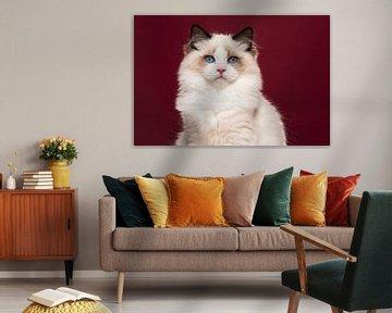 Ragdoll kat van Elles Rijsdijk