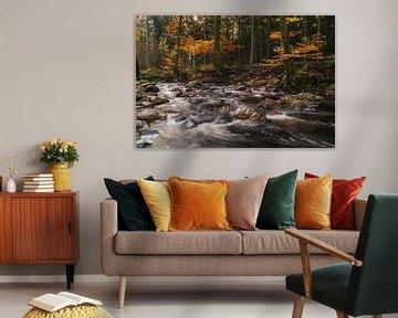 Herfst versnelling van Joris Pannemans - Loris Photography