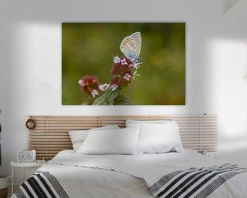 Vlinder (heideblauwtje) op de heide, natuurfoto van Heino Minnema