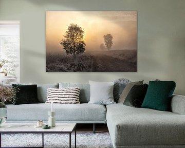 Gouden morgen van Maarten Kooij
