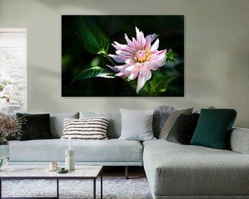 Blume im Schatten von Colin Eusman