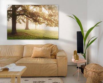 Gouden bladeren van Joris Pannemans - Loris Photography