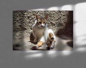 Starrende Katze auf dem Boden von Sama Apkar
