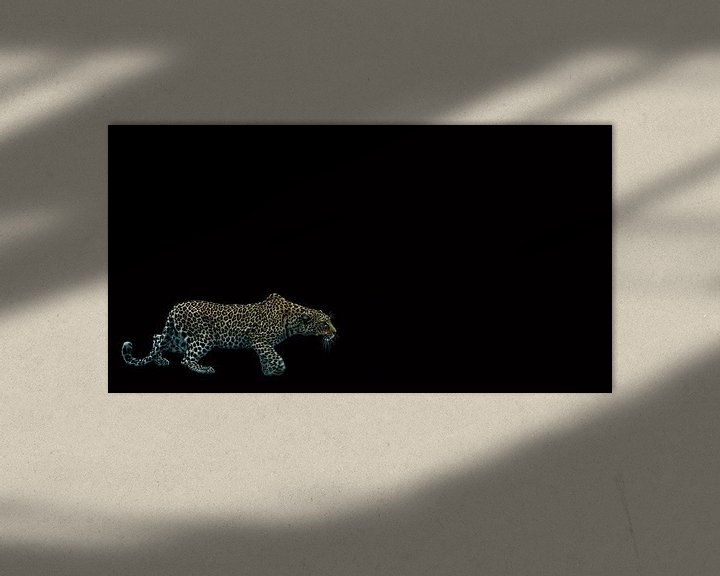 Sfeerimpressie: Sluipen in het donker van Sharing Wildlife