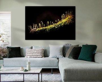 Moos auf einem alten Baumstamm, Naturfotografie von Heino Minnema