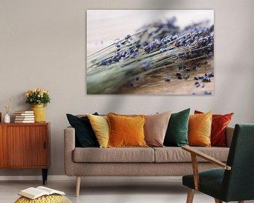 Lavendel von Kristof Ven