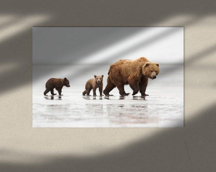 Beispiel: Grizzly (Ursus arctos horribilis) Mutter mit zwei einjährigen Jungtieren auf einer Sandbank bei Ebbe von Nature in Stock