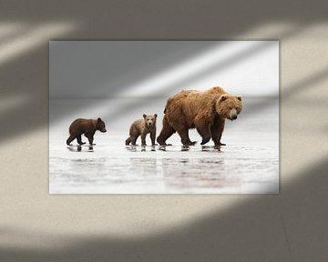 Grizzly (Ursus arctos horribilis) moeder met twee eenjarige welpen op zandplaat bij eb muddy estuary van Nature in Stock