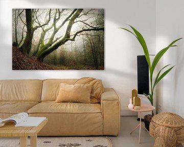 Misty Forest, Speulderbos
