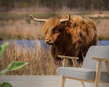 Schotse hooglander in het gras van Mandy van Tilborg