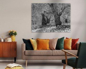 Frühling zwischen den alten Olivenbäumen in Schwarz-Weiß von Bep van Pelt- Verkuil