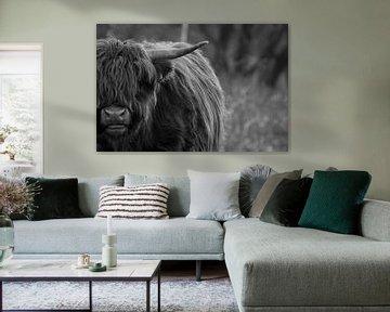 Schotse hooglander in zwart-wit van Mandy van Tilborg