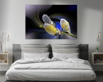 Weidenkätzchen vor einem farbenfrohen abstrakten Hintergrund von Harry Adam