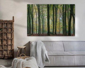 Herfstbos op de Veluwe van Adri Klaassen