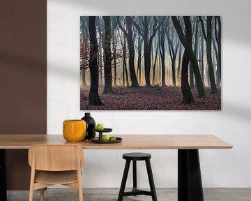 Zonnestralen door het bos van Adri Klaassen