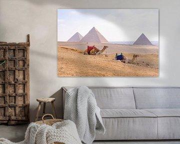 Kamelen bij Piramides van Gizeh, Egypte van Jessica Lokker