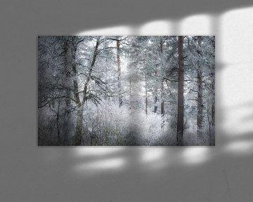 Bäume im winterlichen Frost von Tobias Luxberg