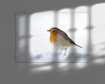 Robin ( Erithacus rubecula ) dans la neige, hiver profond, plumage gonflé, faune, Europe.