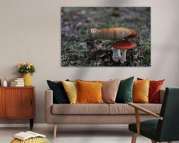 Rode paddenstoel van Chantal Elsinga