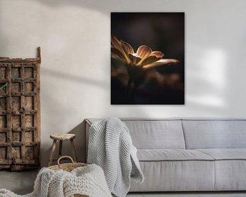 Soft yellow flower van Sandra Hazes
