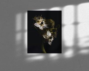 Little white flowers van Sandra Hazes