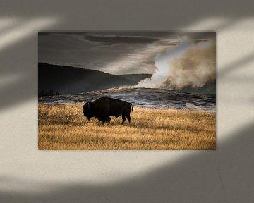 Amerikaanse bizon in Nationaalpark Yellowstone Amerika voor de Old Faitful geiser van Christien Brandwijk