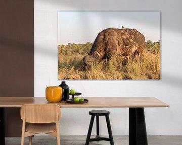 Weidende Wasserbüffel im Okavango-Delta, Botswana von R.Phillipson