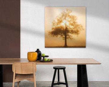 Eenzaam boom in de mist van Maurice Dawson