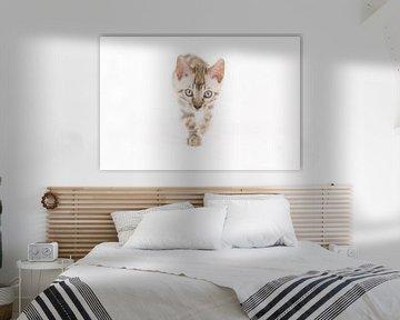 Bengaal kitten van Yvonne Pieters
