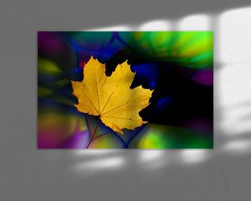 Ahornblatt vor abstraktem farbigen Hintergrund von Harry Adam