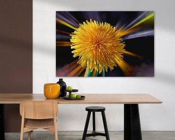 Löwenzahn - Taraxacum officinale - freigestellt vor einem abstraktem Hintergrund von Harry Adam