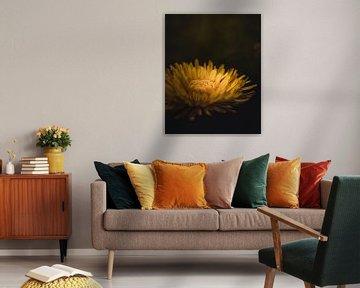 Gelbe Schönheit von Sandra Hazes