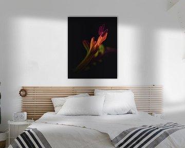 Orangefarbene Flammenblume von Sandra Hazes