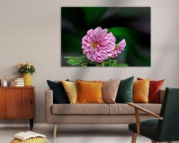 Rosa Dahlie vor einem farbenfrohen abstrakten Hintergrund von Harry Adam