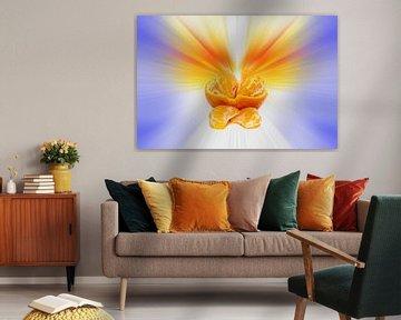 Mandarine vor einem farbenfrohen abstrakten Hintergrund von Harry Adam