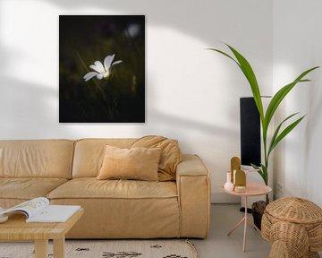 Schöne weiße Blume von Sandra Hazes