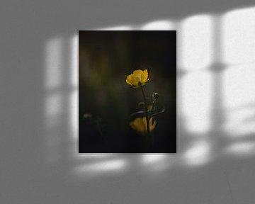 Buttercup van Sandra Hazes