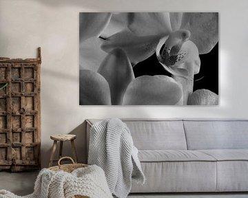 Im Inneren einer Orchidee von Youri Mahieu