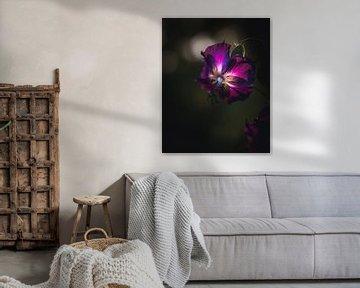 Violette Blume von Sandra Hazes