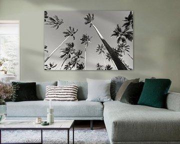 Palmbomen van Bart van Mastrigt