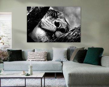 zwart-wit leeuw van Bart van Mastrigt