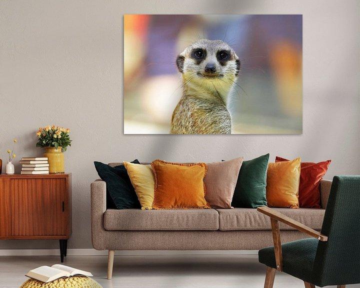 Impression: Le suricate regarde la caméra sur Frank Herrmann