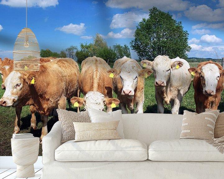 Sfeerimpressie behang: Zes koeien die naar de camera kijken van Frank Herrmann