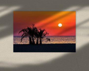 Palmen am Strand im Sonnenuntergang